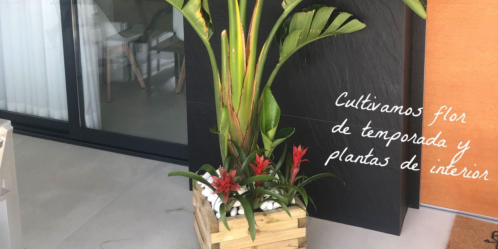Cultivamos flor de temporada y flores de interior