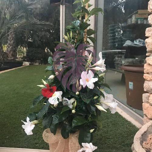 jardineria1